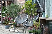 Kleiner Sitzplatz mit Olivenbaum und Calamondinorange