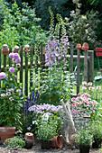 Beet mit Rittersporn, Phlox, Nelken, Dahlie, Mehlsalbei und Spinnenpflanze