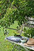 Frisch gepflückte Beeren der Felsenbirne in Schalen