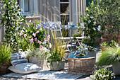 Terrasse mit Dipladenien, Sternjasmin und Gräsern