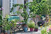 Terrasse mit Kirschbaum und Himbeere