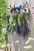 Lavendel und Salbei zum Trocknen aufgehängt