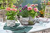 Töpfe mit Zinnien und Lavendel in Stoffsäckchen als Tischdeko