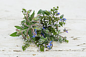 A bunch of calamint and borage on a wooden surface