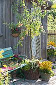 Sommerapfel 'Nela' unterpflanzt mit Efeu und Süßkartoffel