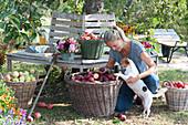 Apfelernte an Baumbank unterm Apfelbaum