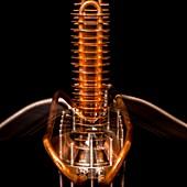 Heat exchanger for neutron beam apparatus