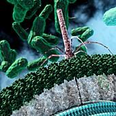 C. difficile antimicrobial treatment, illustration