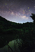 Fireflies and Milky Way, time-exposure image