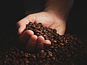 Person with hand full of coffee beans