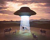UFO beaming up cow, illustration