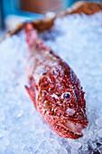 Roter Drachenkopf auf Eis
