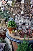 Korb mit Zweigen von Korkenzieherhasel österlich mit Eiern geschmückt