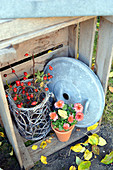 Herbstliches Stillleben mit Hagebuttenzweigen und Chrysantheme