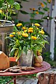 Strohblume im Zinktopf