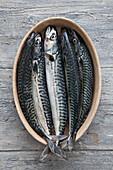 Mackerel in a dish