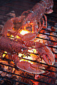 Lobster cooking on a BBQ