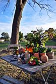 Herbstarrangement auf Tisch im Garten