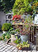 Herbst - Arrangement mit Weißdornzweigen, Buchs und Laternen