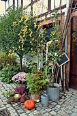 Herbst - Arrangement mit Chrysantheme, Duftgeranie, Heide und Kürbis
