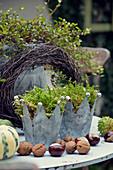 Zinkkronen mit Moos, Nüssen und Kastanien als Herbstdekoration