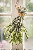 Mountain tea hung to dry