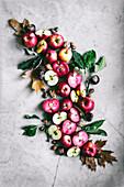 Äpfel, ganz und halbiert mit Nüssen, Kastanien, Eicheln und Herbstlaub (Aufsicht)