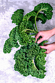 Freshly kale in the hands of a girl