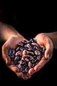 Hands holding heirloom beans
