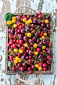 Different fresh cherries