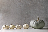 Grey Confection and white whole uncooked decorative pumpkins in row on white marble table with grey wall