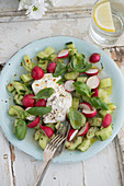 Cucumber salad with radishes, basil and burrata