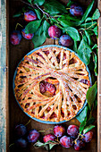 Plum pie with spiral design crust