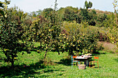 A laid table in an apple orchard