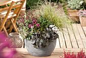 Herbstlich bepflanzter Topf mit Purpurglöckchen, Fetthenne, Alpenveilchen, Heide und Segge