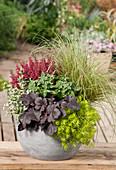 Herbstlich bepflanzter Topf mit Purpurglöckchen, Fetthenne, Goldnessel, Topferika und Segge