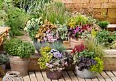 Herbst - Arrangement mit bepflanzten Töpfen