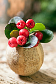 Scheinbeere - Gaultheria procumbens