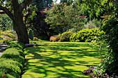 Lichtspiel auf Rasenfläche unter Baum