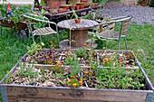 Urban Gardening mit Kräutern und Sommerblumen im Hochbeet