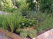 Hochbeet mit Lavendel, Ysop, Salbei, Thymian aus Brettern gebaut