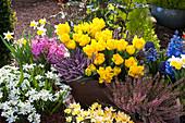 Frühlings-Arrangement mit Tulpen, Heide, Milchstern, Hyazinthen und Krokus