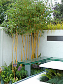 Bambus hinter Bank mit Glasplatte als Sitzfläche