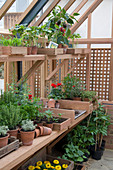 Arbeitsplatz im Gewächshaus mit Kräutern und Gemüse - Jungpflanzen