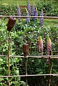 Flaschen als Ohrwurmhäuschen im Bauerngarten mit Lupinen