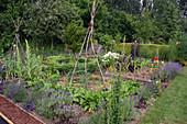 Gemüsegarten mit Lavendel und Buchs-Rondell