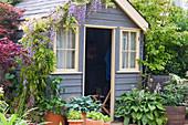 Kleines Gartenhaus mit Blauregen, Funkien in Töpfen