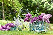 Blühende Fliederzweige in Gläsern auf Dekodreirad