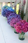 Hortensienblüten in Flaschen farblich aufgereiht
