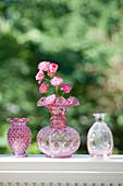 Blüten von Rose 'Lovely Fairy'